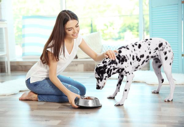 Planning your dogs meals for maximum taste and nutrition.