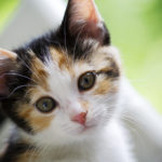 Getting to Know Your Cats Worms