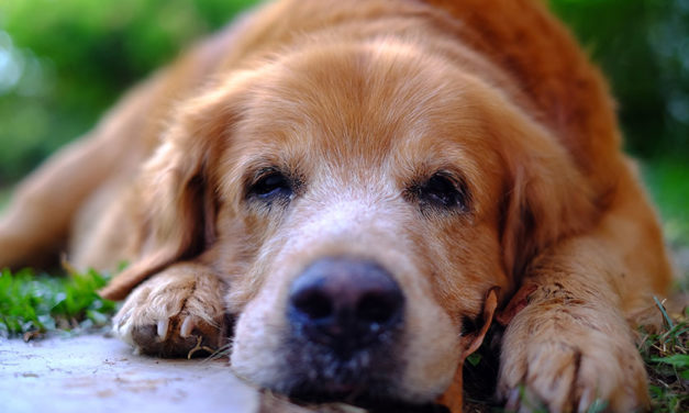 Paralysis tick and your dog: The 8 Warning signs