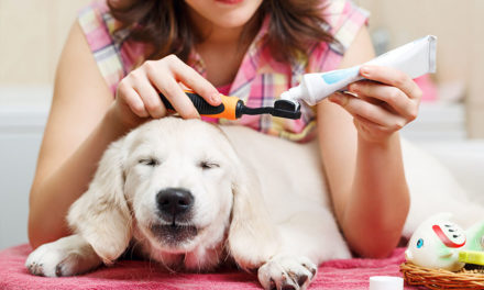 Teeth Trouble in canines