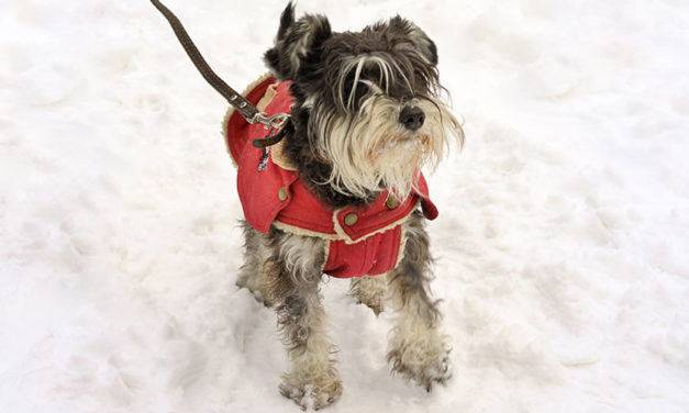 Climate Control for Your Dog