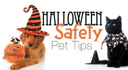 5 Tips on how to keep your pet safe this Halloween