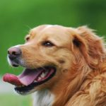 How to get serious about caring for your dog's teeth and gums