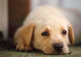 How to diagnose a sick dog.